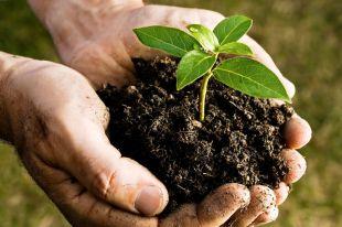 Semaine horticole de Varennes du 30 mai au 3 juin : compost et paillis offerts gratuitement