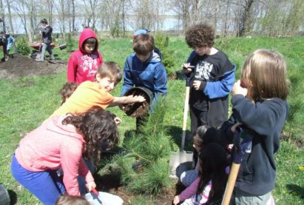 Un groupe de 350 écoliers plantent une haie d'honneur de 350 arbres