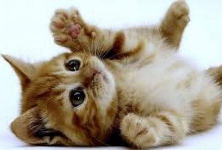 Seulement 4% des chats errants sont réclamés au SARS