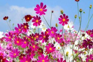 Participez aux Mérites Varennes en fleurs à Varennes