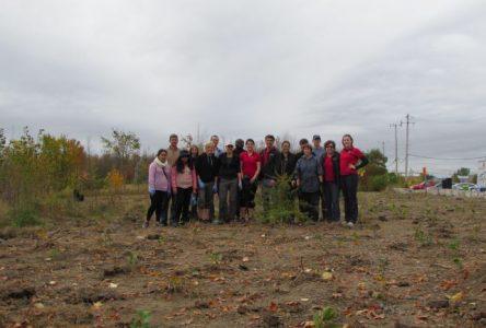 Bénévoles recherchés pour l'entretien d'une belle plantation au boisé Du Tremblay