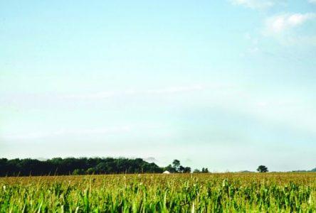 Le conseil municipal adopte une résolution pour sauvegarder la culture du maïs au parc des Îles