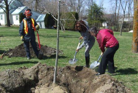 Boucherville plante cinq arbres pour souligner le Jour de la Terre