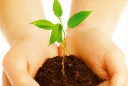 Jour de la Terre: plantation d'arbres à Saint-Amable