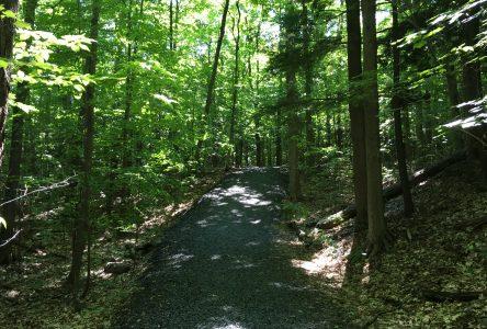 Investissement de 125 000 $ à Sainte-Julie pour l'aménagement et la mise aux normes d'un sentier pédestre