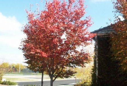 La Ville de Sainte-Julie tiendra une vente d'arbres à prix réduit le 26 avril