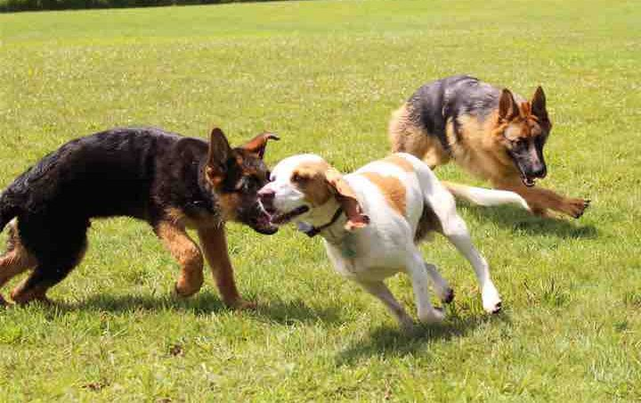 Verchères aura son parc canin