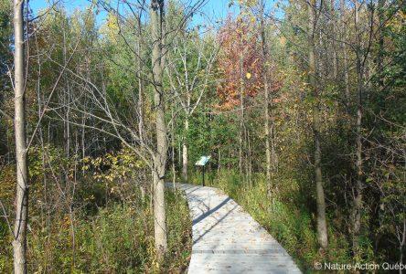 Les nouveaux sentiers publics au boisé Du Tremblay sont ouverts depuis maintenant six mois: l'heure est au bilan