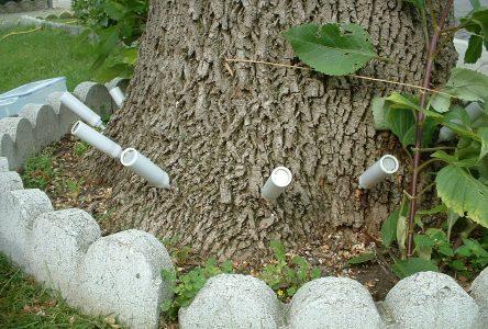 La Ville de Boucherville convie les citoyens à des séances d'information sur l'agrile du frêne
