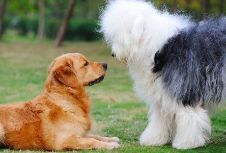 Après avoir soulevé une controverse, le parc à chiens prévu au parc de Brouage sera installé ailleurs