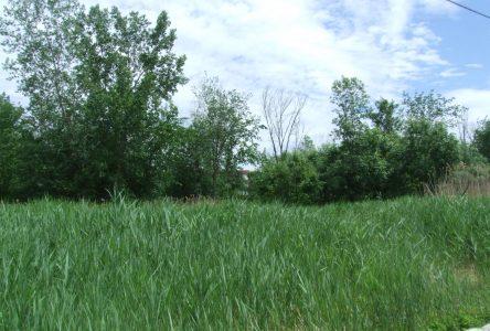 La Ville de Boucherville acquiert un terrain boisé voisin de l'immeuble Caleo