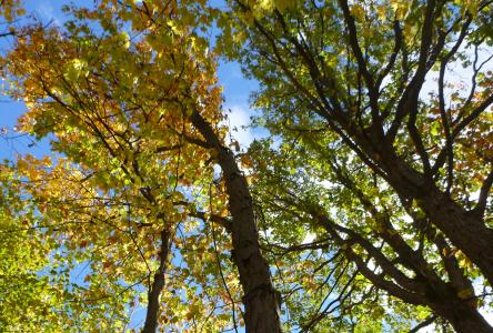 Une seconde vie pour les arbres de l'agglomération de Longueuil