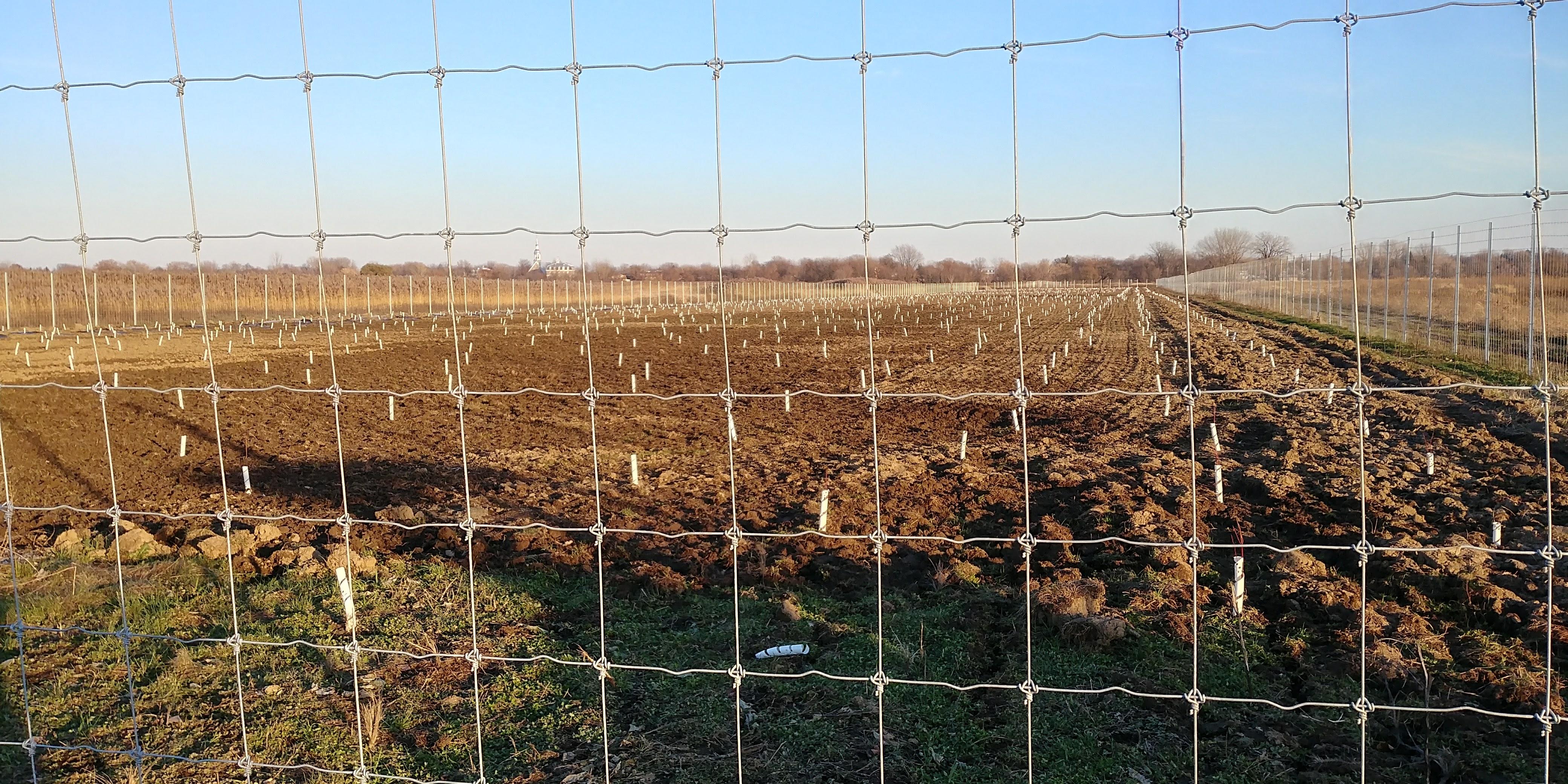 La restauration des terres agricoles au parc des Îles-de-Boucherville expliquée à La semaine verte en janvier