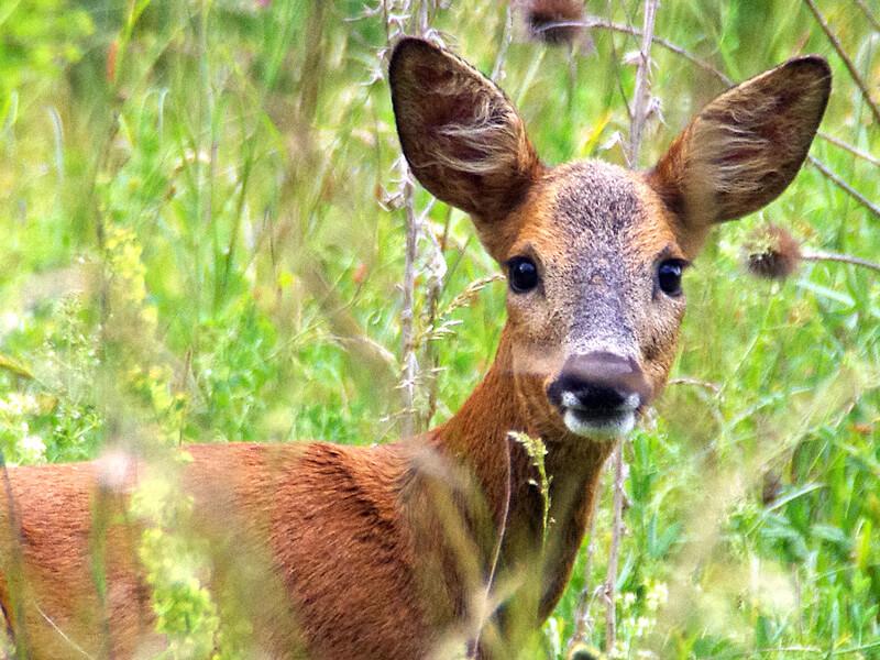 Propositions concrètes du PQ en matière de faune