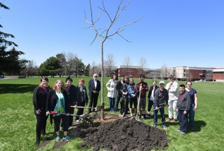 La Ville de Boucherville offre un arbre à l'école secondaire De Mortagne