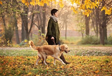 Les chiens seront admis dans certains secteurs du parc des Îles-de-Boucherville le printemps prochain
