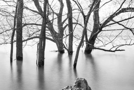 Contempler la nature dans les photographies de Denis Hunter