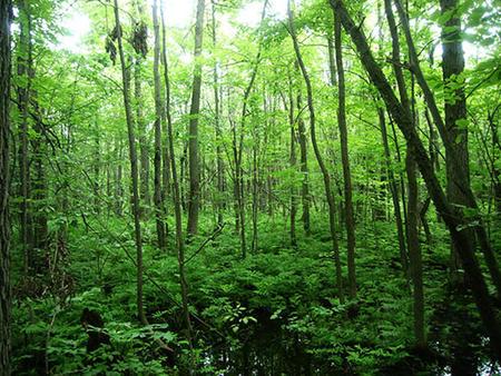 Longueuil lance un appel de projets communautaires de plantation d'arbres sur les terrains de la Ville