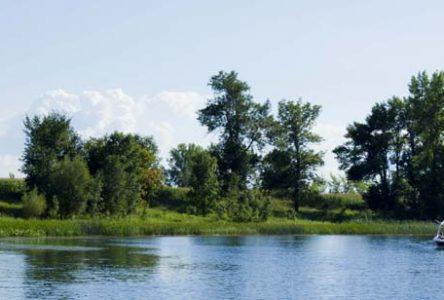 Île Bouchard : sensibilisation aux enjeux aviaires en milieu agricole et aménagement de leur habitat