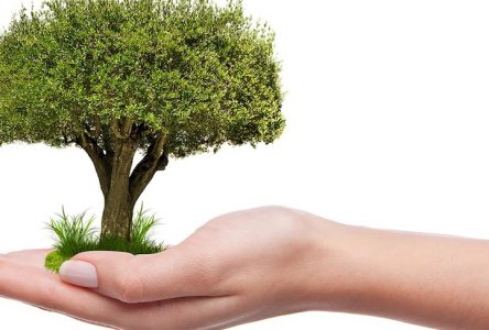 Une entente pour la plantation de 8 892 arbres dans le parc Saint-Charles à Varennes