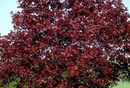 Une vente d'arbres à prix réduit le 25 avril pour les citoyens julievillois