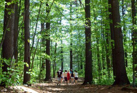 Une aire protégée s'ajoute au parc régional des Grèves à Contrecœur