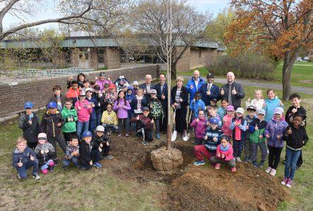 La Ville de Boucherville offre deux arbres à l'école primaire De La Broquerie