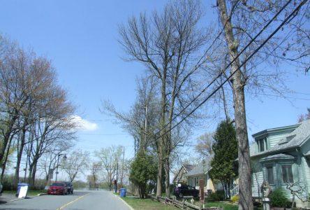 La Ville multiplie les efforts pour préserver son couvert forestier