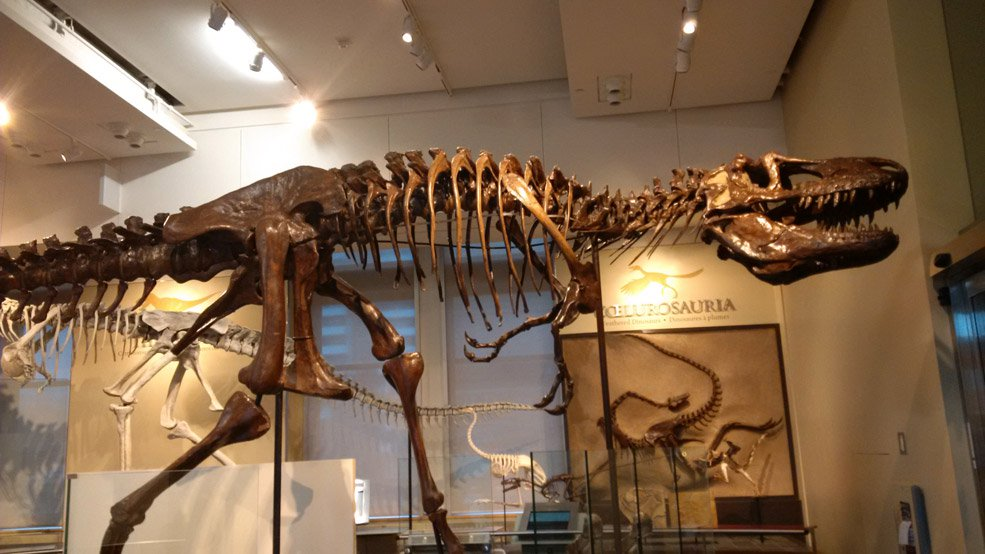 Samedi l'archéologie le 24 août – Animation sur les fossiles
