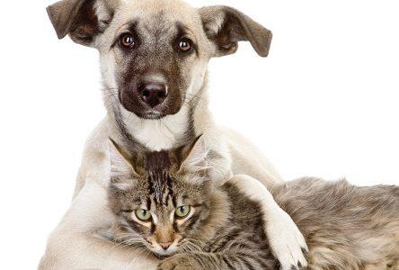 Les Services Animaliers de la Rive-Sud ont accueilli près de 2000 chiens et chats depuis le début de l'année