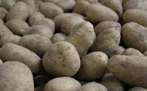 Problématique de la pomme de terre : Xavier Barsalou-Duval rectifie les faits
