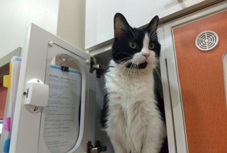 Promotion d'urgence en raison du nombre alarmant d'abandons : 48 chats adoptés en une seule fin de semaine
