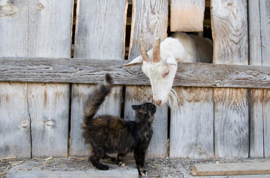 Proanima recherche des propriétaires de ferme ou d'écurie pour adopter des chats à besoins particuliers