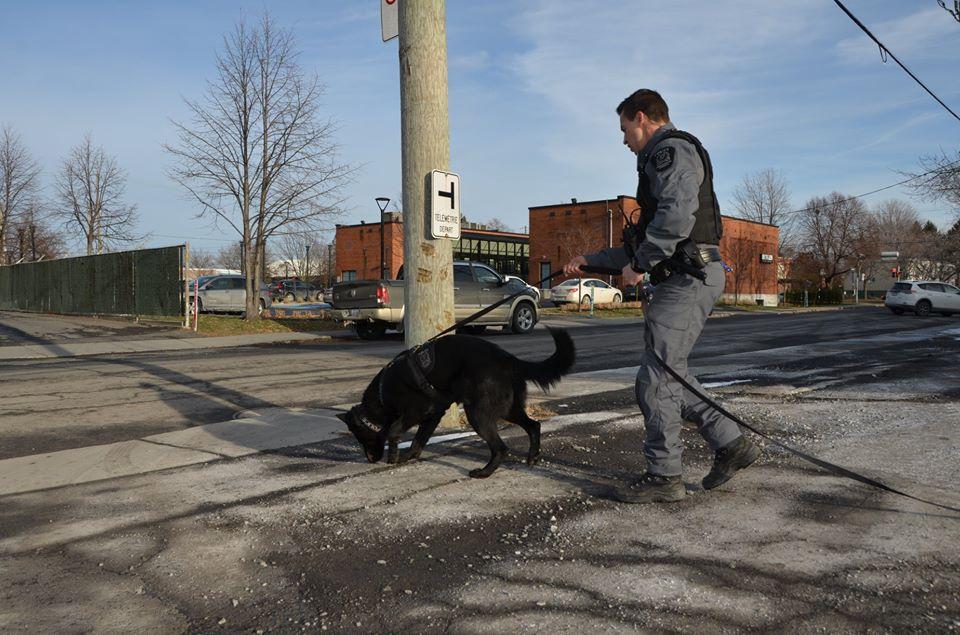 La vigilance d'une citoyenne permet l'arrestation d'un voleur