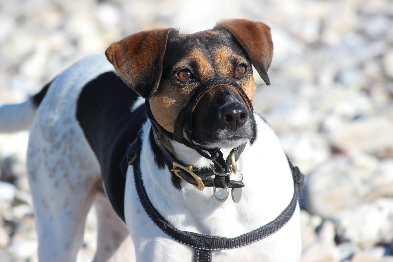 De nouvelles règles en vigueur le 3 mars pour les propriétaires de chiens au Québec
