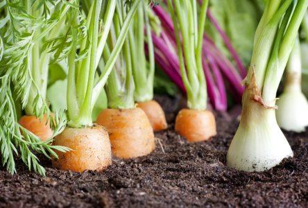 L'autosuffisance alimentaire du Québec passe par la protection du territoire agricole