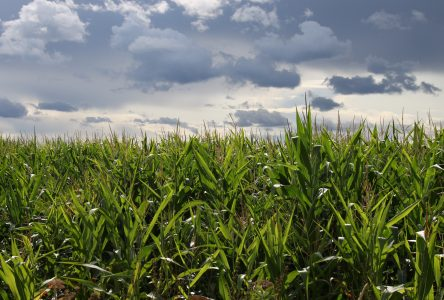Sécheresse et perte de main d'œuvre: L'été de tous les défis pour les agriculteurs de la MRC