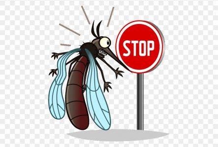 En été, il y a d'autres virus qu'on doit avoir à l'œil!
