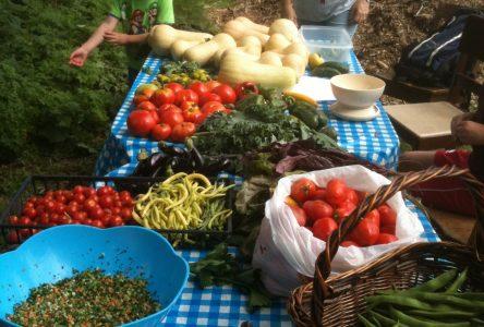 Au Collectif 21 de Boucherville, oui on sait planter des choux… mais tellement plus