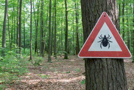 Maladie de Lyme : Boucherville, Saint-Bruno et Longueuil en « zone rouge »