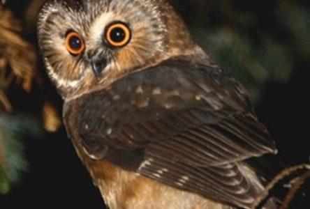 Quand l'ornithologie devient un zoo