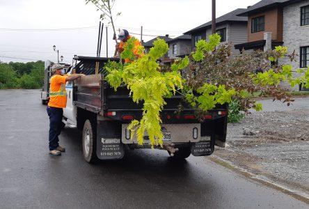 Jour de la Terre: distribution gratuite de 200 arbres à Contrecœur