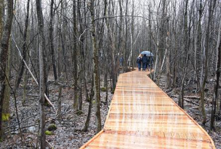 Un sentier pédestre au parc du Boisé-du-Pays-Brûlé