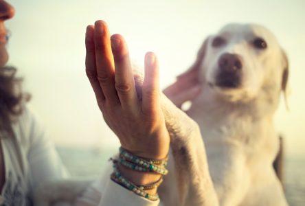 Proanima lance un nouveau service de consultations privées en comportement canin