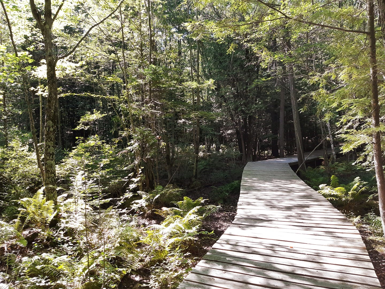 Contrecœur veut protéger sa biodiversité et son couvert forestier