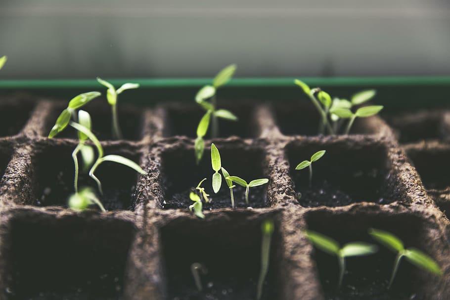 Contrecœur en voie de devenir une ville nourricière