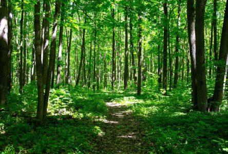 La Ville de Sainte-Julie en mode solution à la recherche de partenaires pour protéger le boisé adossé au mont Saint-Bruno
