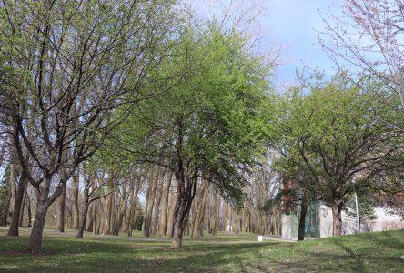 Boucherville investira 500 000 $ en 2021 pour planter 1700 arbres