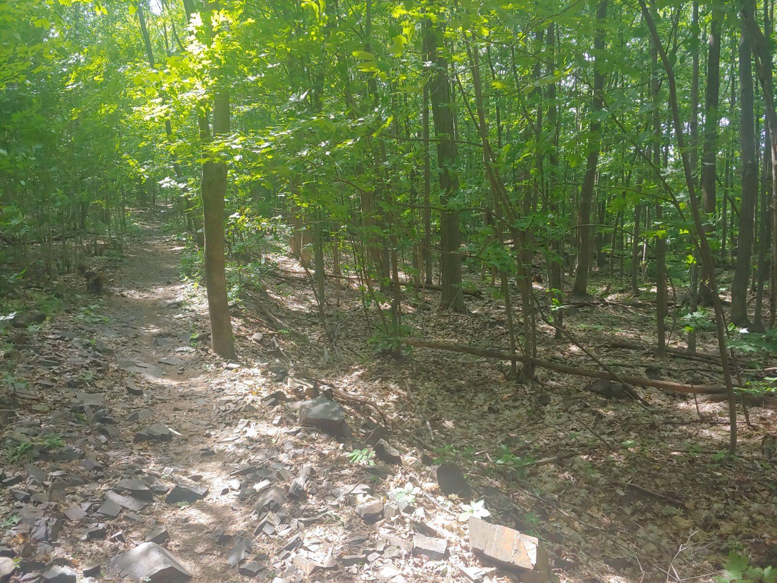Une demande de financement à la CMM pour le projet d'acquisition des lots au Domaine des Hauts-Bois
