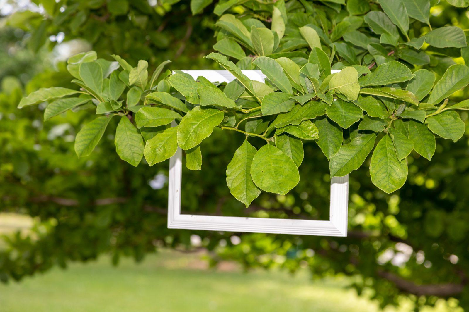 La nature près de chez vous sera au parc des étangs Antoine-Charlebois les 10 et 11 juillet prochains!